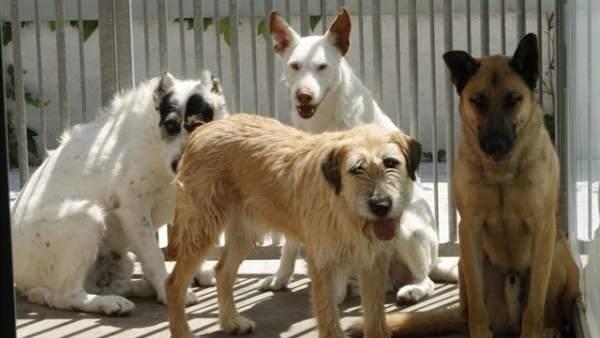 Perros en el zoosanitario.
