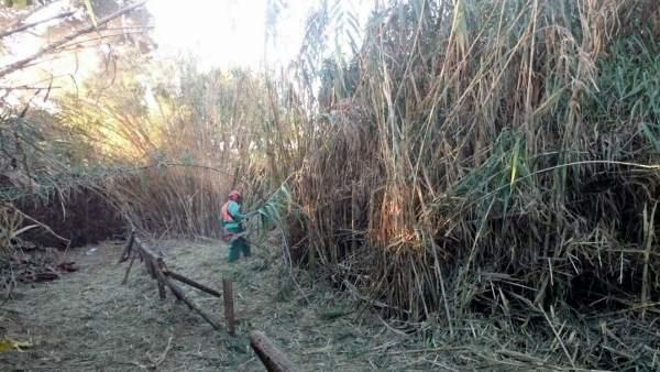 Cauce arroyo sin desbrozar  Estepona Ayuntamiento ha actuado por prevención