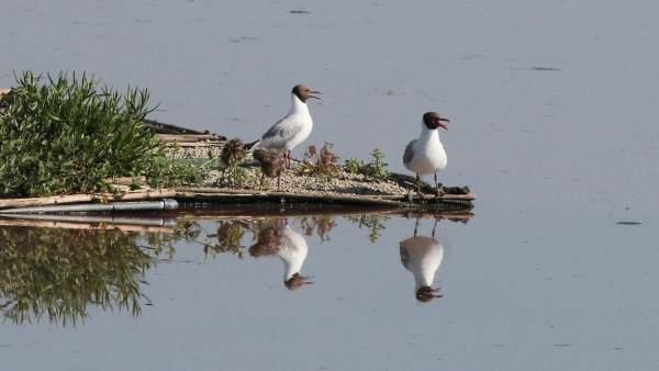 Aves en S' Albufera de Mallorca