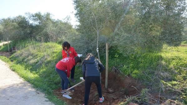 Plantación colectiva en Bormujos (Sevilla)