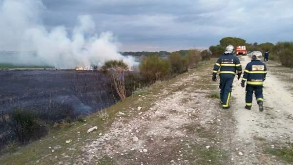 Incendio en la carretera Guadalcacín-Nueva Jarilla, en Jerez (Cádiz)