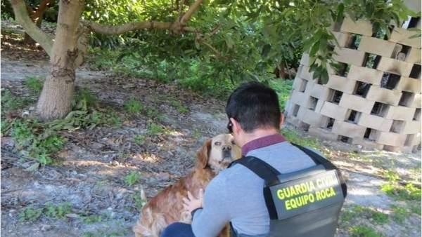 El perro en la finca donde el detenido trató de robar