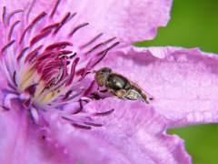 Jaque a los pesticidas que acaban con las abejas