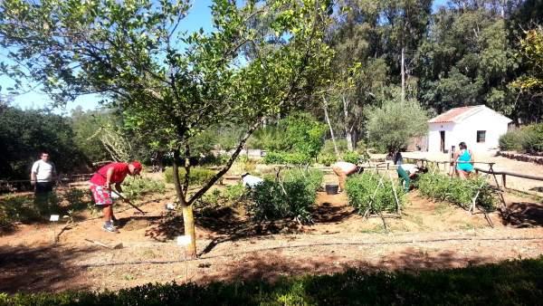 Labores de huerto tradicional