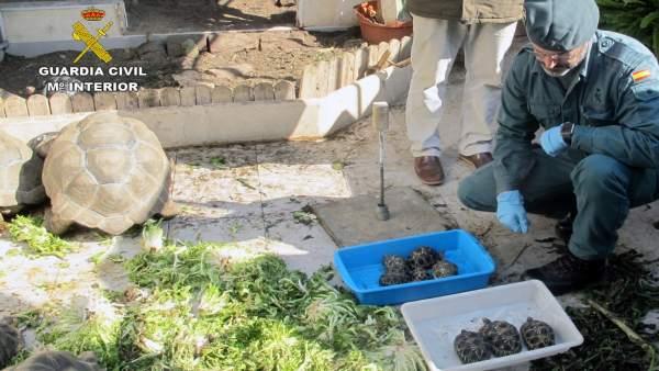 Ejemplares del criadero ilegal de tortugas