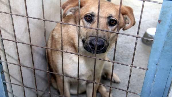 Diputación promueve la adopción de animales