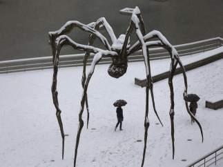Araña helada en Bilbao