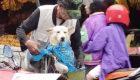 Protege a su perro de la lluvia de una manera muy original
