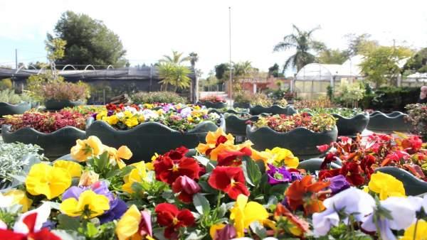 Flores proyecto jardin estepona costa del sol