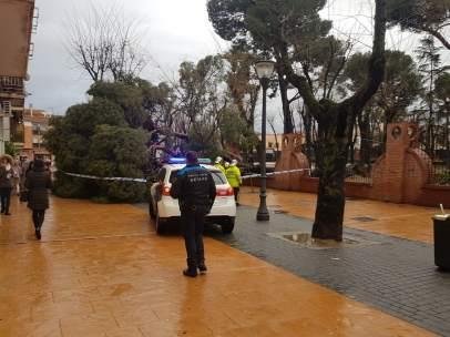 Vista del árbol caido del Parque de Los Escolapios.