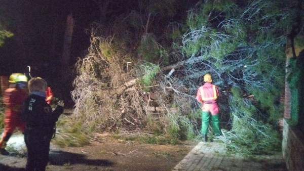 Retirada de árboles caídos por el viento
