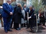 Plantan un olivo por el 11M