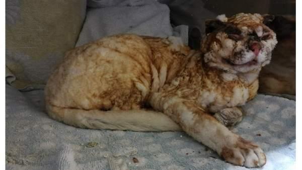 Cartel de búsqueda del responsable de quemar vivo a un gato