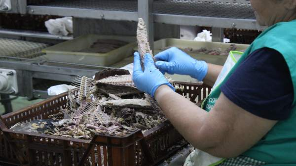 Consejo regulador melva y caballa andalucía mujer pelando pescado manual