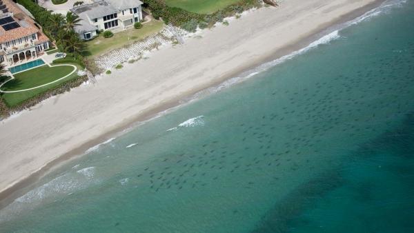 Tiburones migratorios