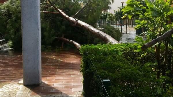 Caída de un árbol en Sevilla