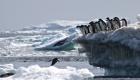 Descubren una gran colonia de pingüinos en la Antártida