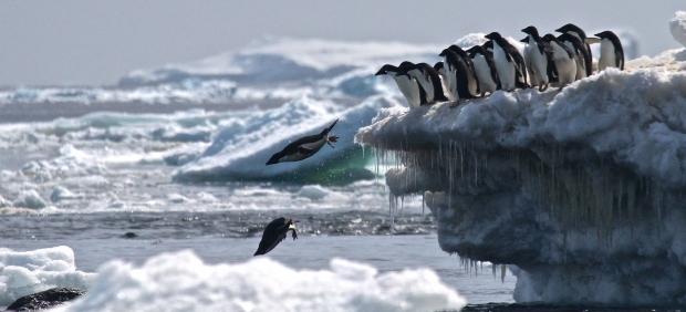 Pingüinos adelaida