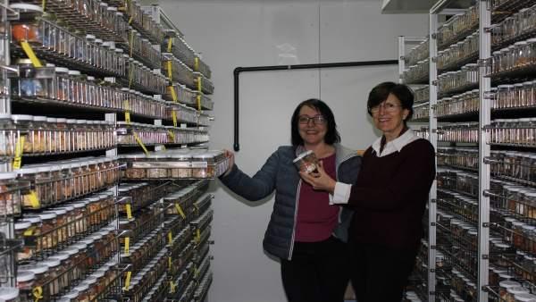 Las investigadoras Belén Picó y María José Díez