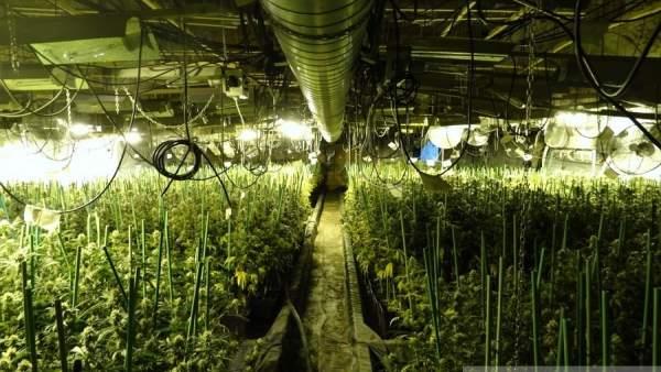 Plantación de marihuana en Figueres (Girona)