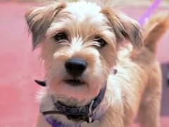 El abrigo de perro más caro del mundo: 24 quilates de oro y 137.000 dólares