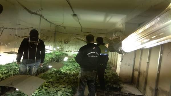 Plantaciones de marihuana descubiertas en Granada