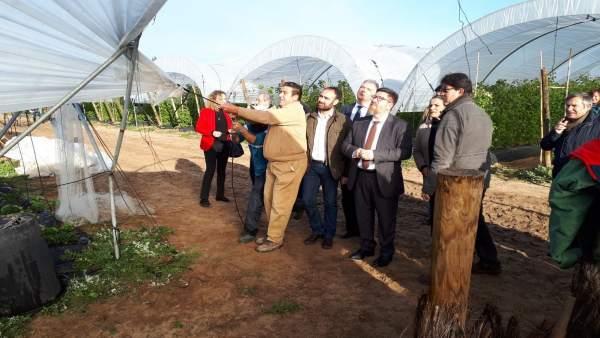 Nota De Prensa Agricultura (Temporal En Huelva)