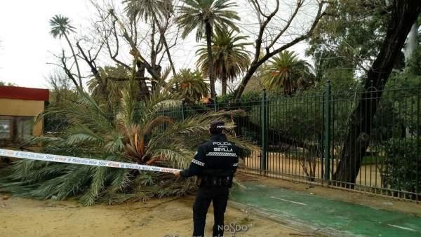 Policía acordona la zona tras una incidencia a causa del temporal