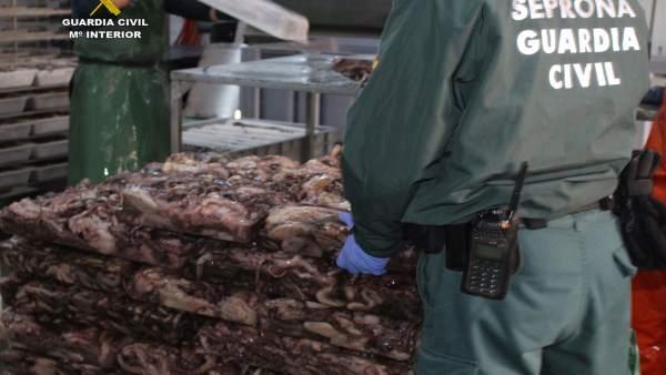 Pulpo intervenido en Ayamonte (Huelva)