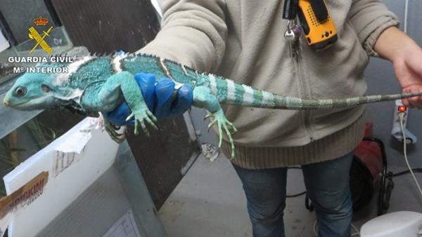 Reptil incautado