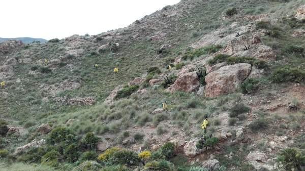 Bomberos forestales rastrean el perímetro marcado en la búsqueda de Gabriel