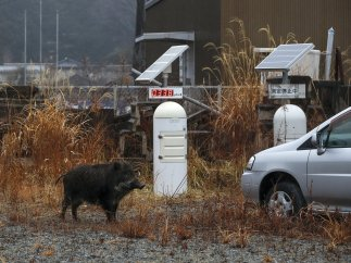 El paisaje fantasmal de Fukushima, 8 años después