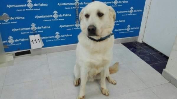 Adopción de un perro en Son Reus