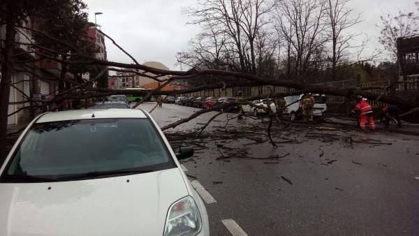 Árbol caído en la calzada por el temporal en Vigo