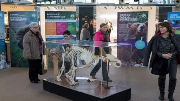 Exposición 'Sigue la huella del oso' en intu Asturias