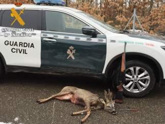 Corzo abatido por un cazador detenido en Palencia. 12 de marzo