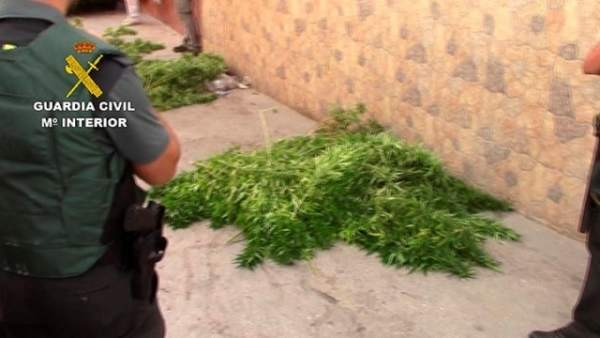 Guardia Civil, Marihuana, droga,