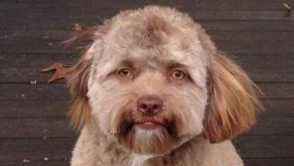 Este perro sorprende por su parecido con los humanos
