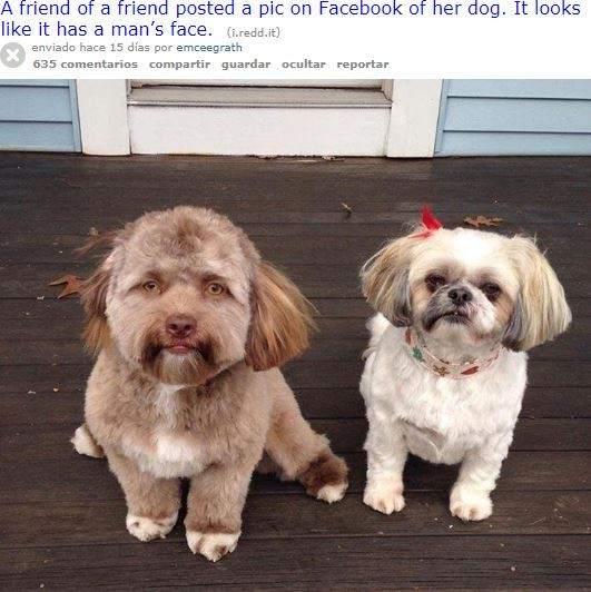 Yogi junto a otro perro.