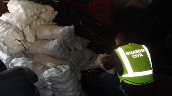 Sacos con los aguacates recuperados por la Guardia Civil.