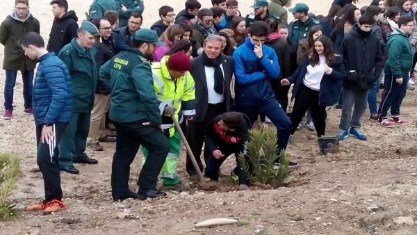 Replantación de árboles