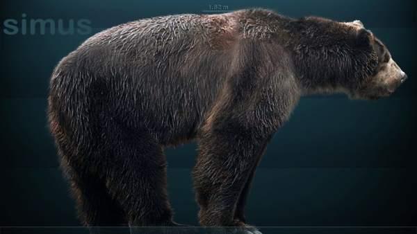 Un estudi demostra que el major carnívor de l'Edat de Gel es va fer vegetarià per a sobreviure