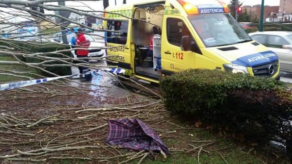 Sanitarios atienden al herido tras caer el árbol. Valladolid. A4-03-2018