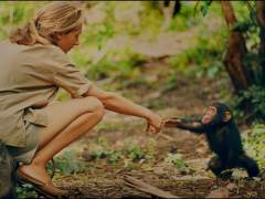 National Geographic estrena este domingo un documental sobre la vida de la primatóloga Jane Goodall