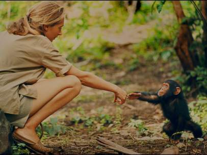 Gombe, Tanzania - Jane Goodall and infant chimpanzee Flint reach out to touch ea