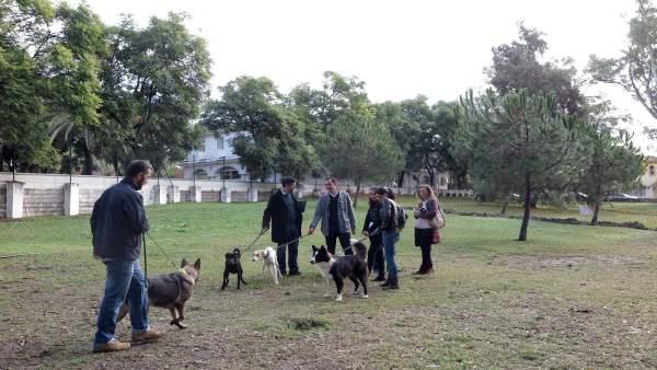 Parque canino marbella ocio perros can disfrute mascotas animales