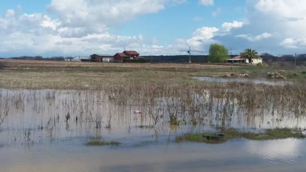 Parcela anegada por las lluvias en Valdeíñigos de Tiétar