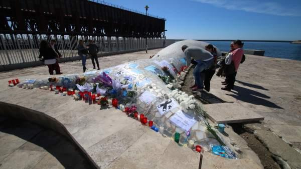 La Ballena de Almería a la que se han llevado ofrendas en recuerdo de Gabriel