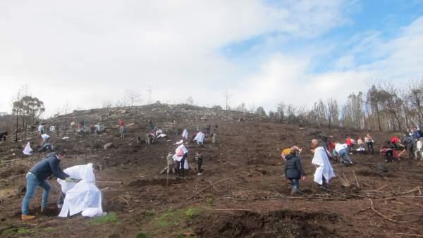 Campaña de reforestación de Abanca en el monte de Coruxo
