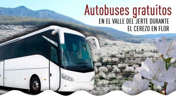 Rutas Gratuitas En Bus Para Recorrer El Valle Del Jerte Durante El Cerezo En Flo